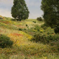 Landschap details